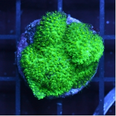 Ultra GreenStylo